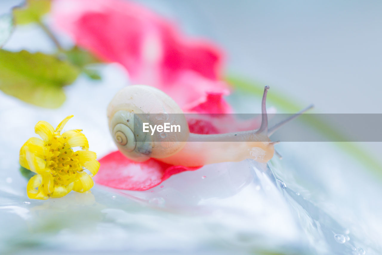 Close-Up Of Snail And Flowers On Wet Umbrella During Monsoon