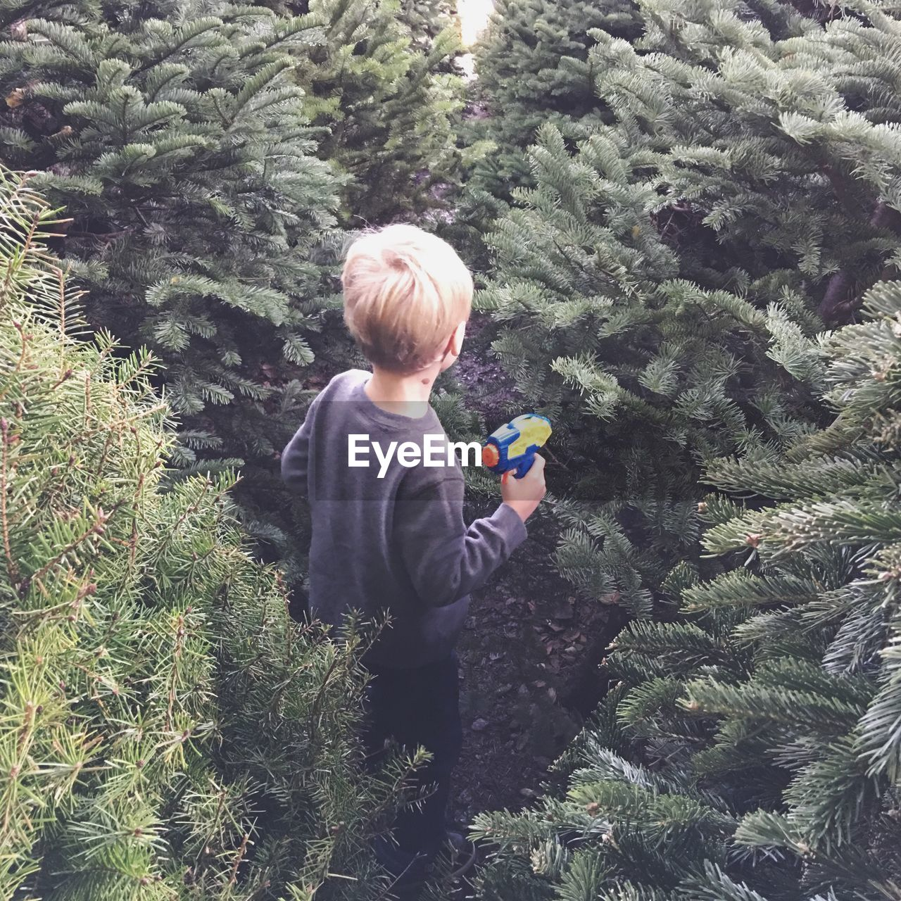 High Angle View Of Boy Holding Water Pistol Amidst Pine Trees
