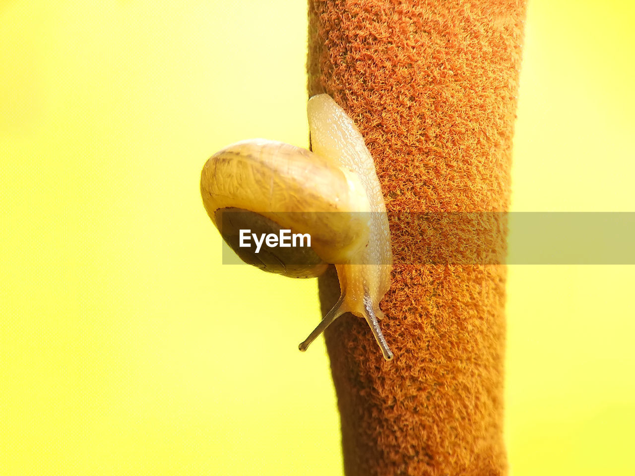close-up, no people, animal wildlife, yellow, copy space, focus on foreground, nature, animals in the wild, studio shot, day, one animal, animal, colored background, seed, outdoors, gastropod, animal themes, food, selective focus, still life
