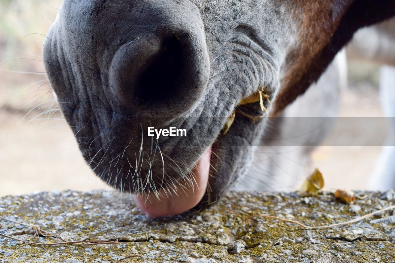 Cropped image of horse nose