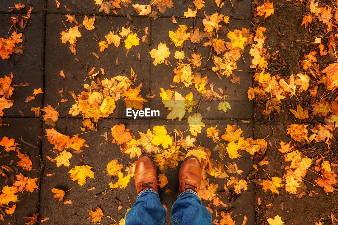 plant part, leaf, autumn, human leg, low section, standing, one person, real people, personal perspective, human body part, change, lifestyles, body part, shoe, day, nature, leaves, leisure activity, orange color, directly above, outdoors, maple leaf, human foot, human limb, jeans, autumn collection