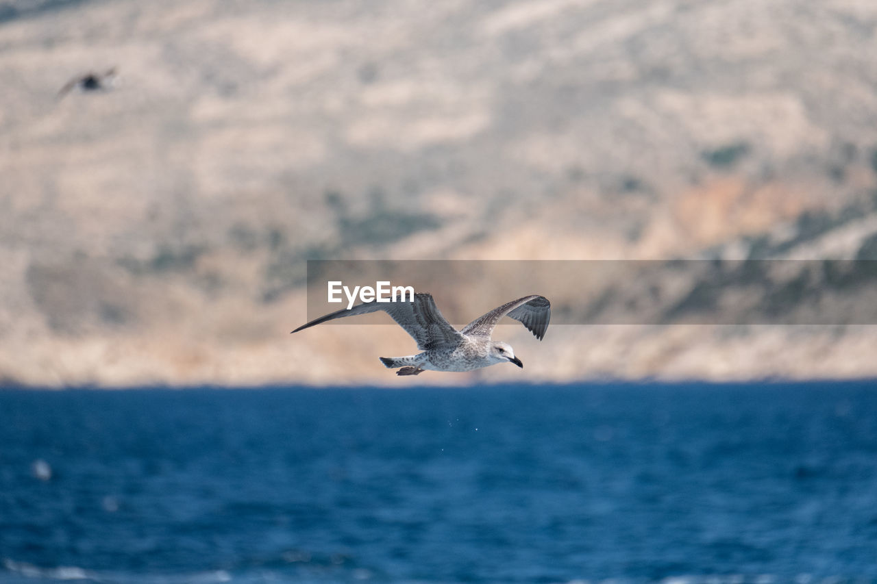 animals in the wild, animal themes, animal, animal wildlife, bird, vertebrate, water, spread wings, flying, one animal, sea, waterfront, mid-air, nature, beauty in nature, motion, scenics - nature, no people, sky, outdoors, seagull, marine