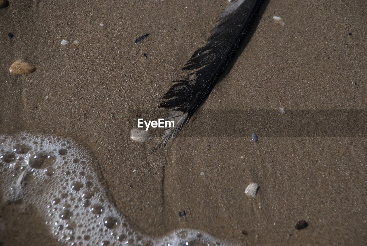 sand, beach, animal themes, feather, no people, animals in the wild, nature, animal wildlife, one animal, water, day, outdoors, bird, close-up, mammal