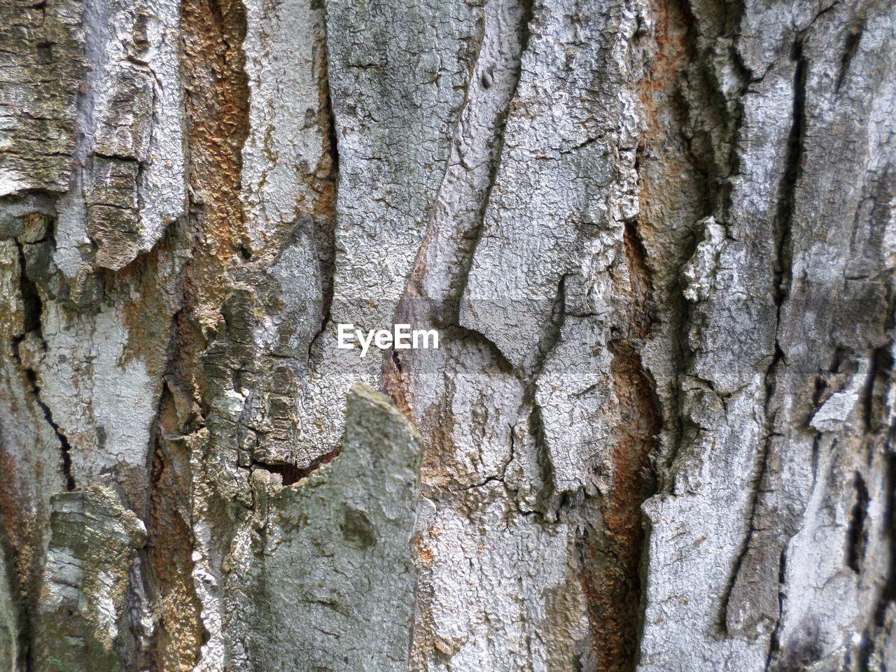FULL FRAME SHOT OF TREE TRUNK WITH BARK