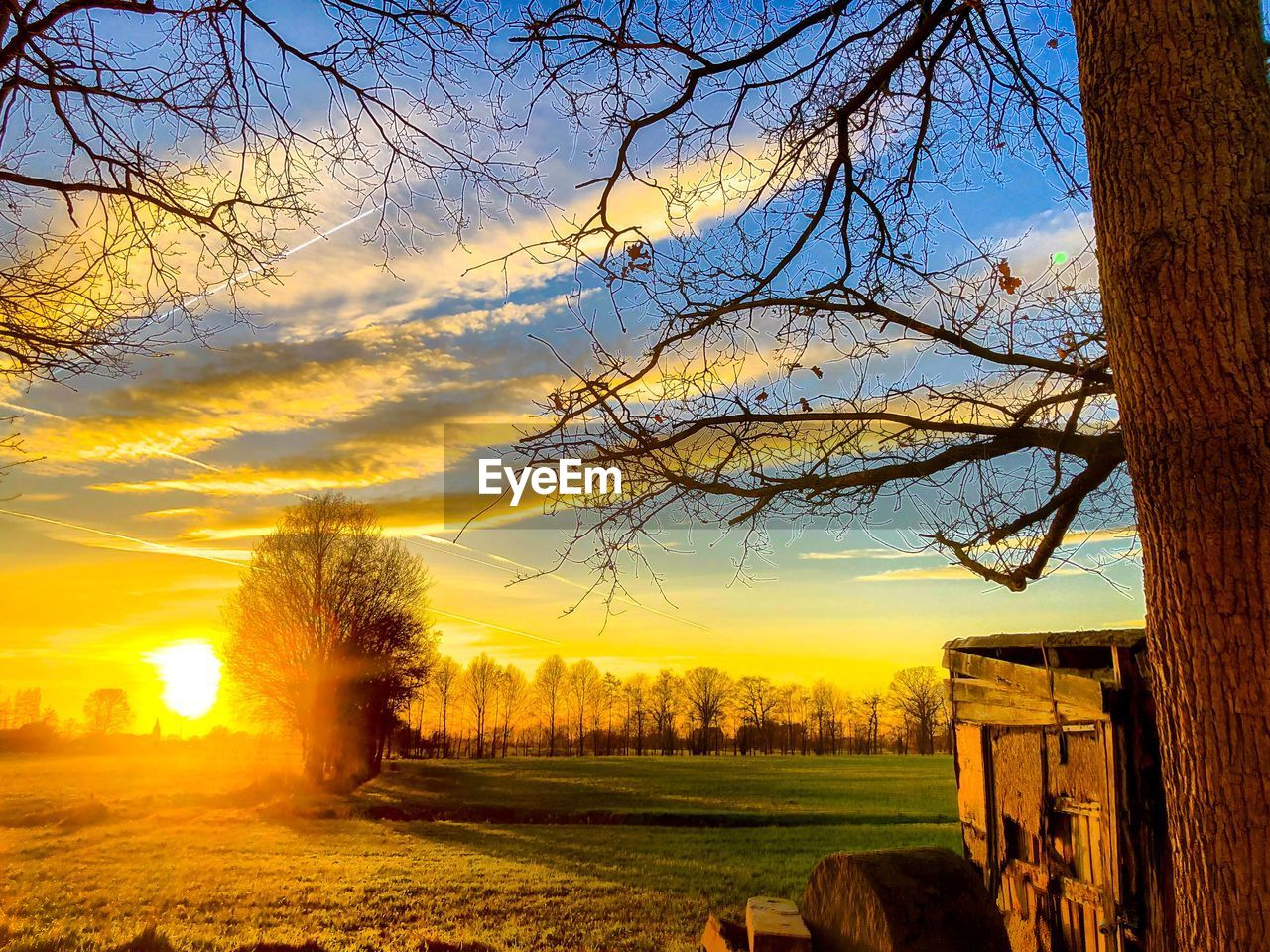 tree, sky, plant, sunset, nature, beauty in nature, cloud - sky, scenics - nature, tranquil scene, landscape, no people, field, branch, tranquility, land, environment, tree trunk, trunk, sunlight, agriculture, outdoors, sun