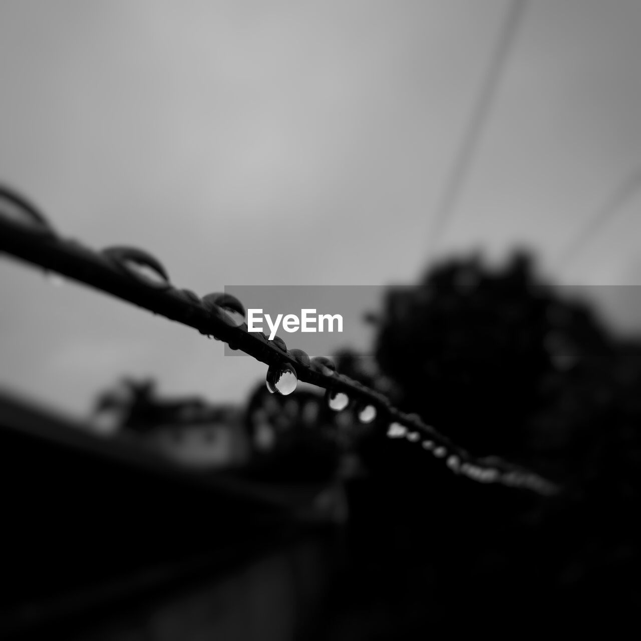 close-up, selective focus, plant, no people, drop, nature, focus on foreground, growth, water, wet, outdoors, safety, day, metal, fence, protection, barbed wire, wire, security, raindrop, rain, dew