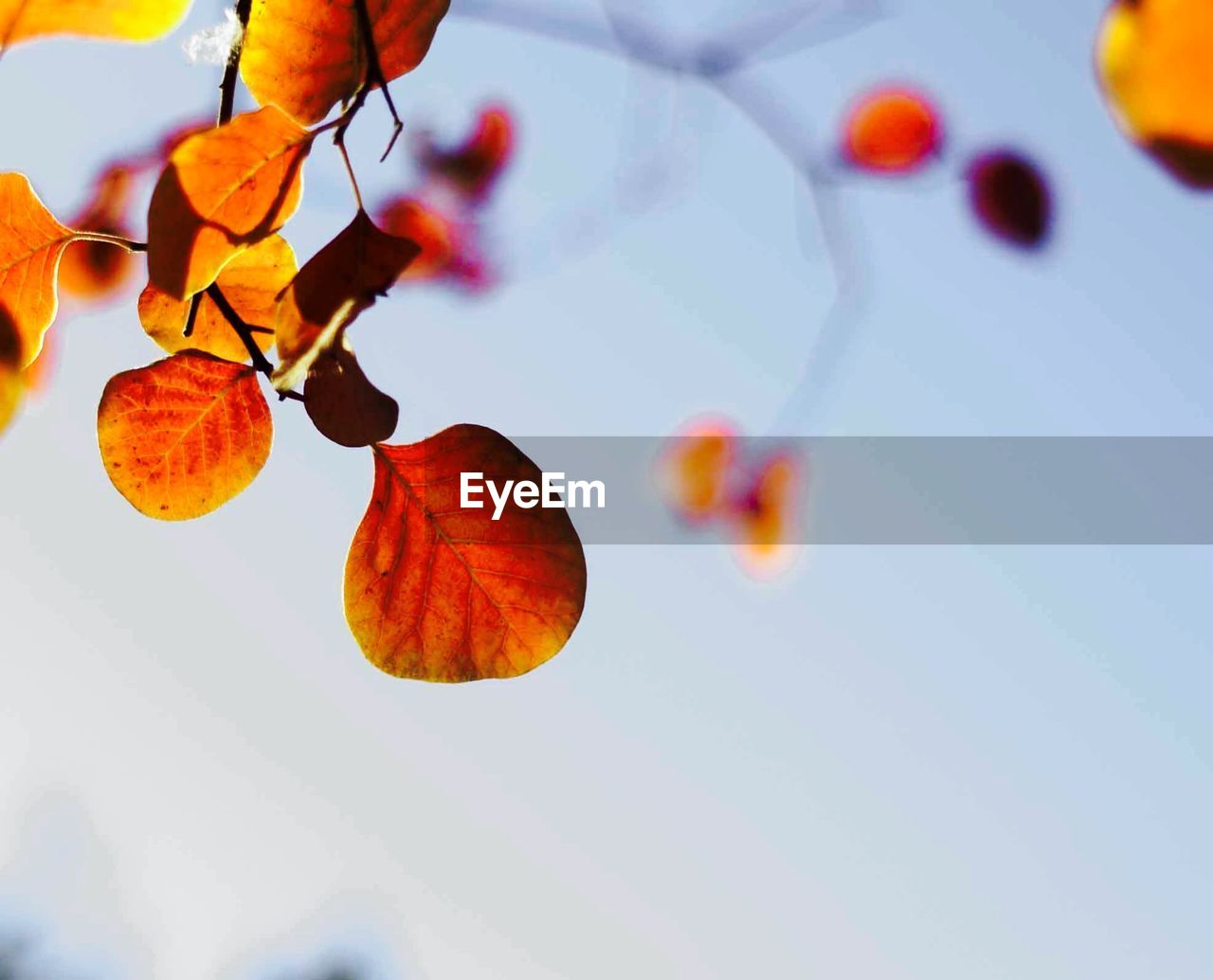 Low angle view of tree leaves against sky during autumn