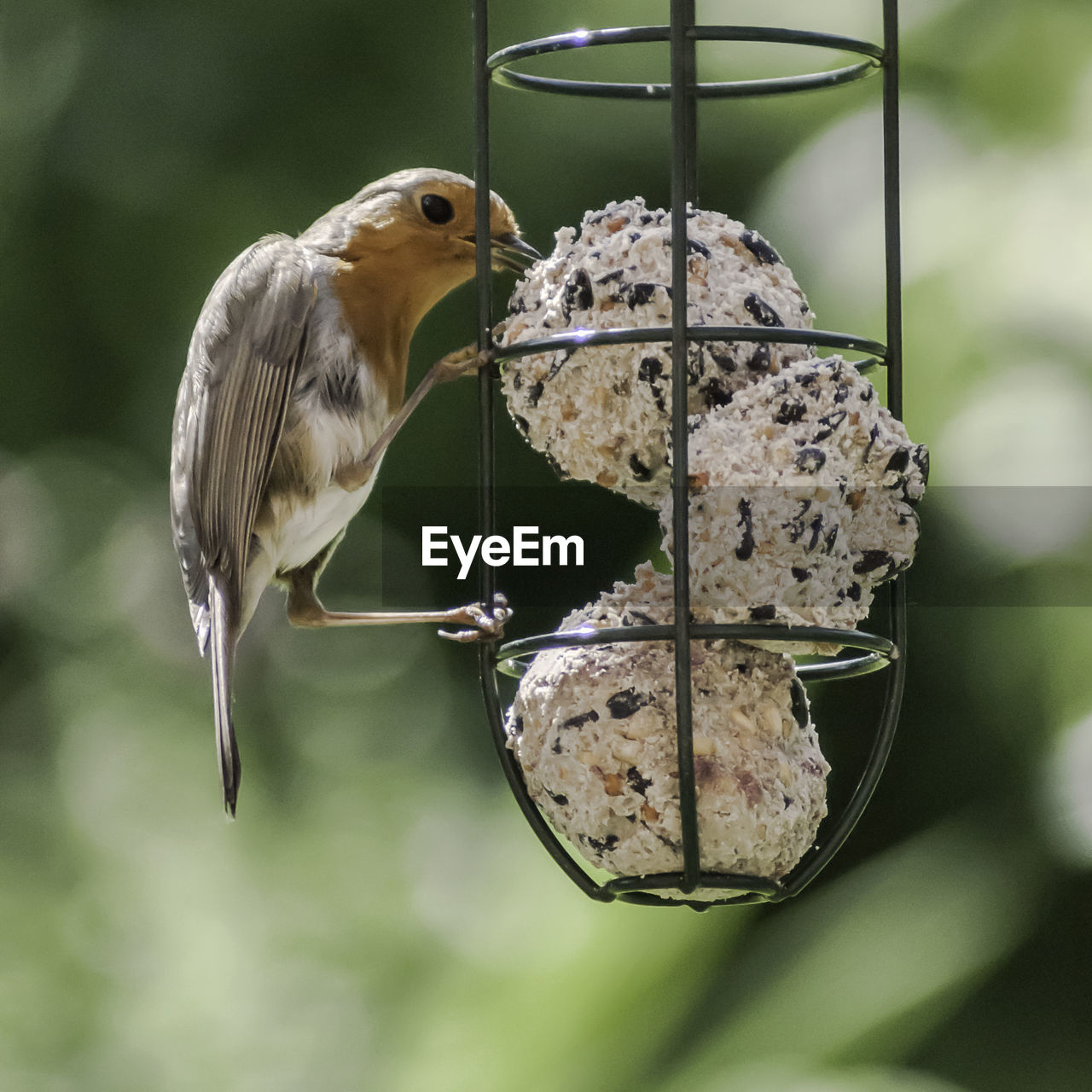 Close-up Side View Of Bird Feeder Against Blurred Background