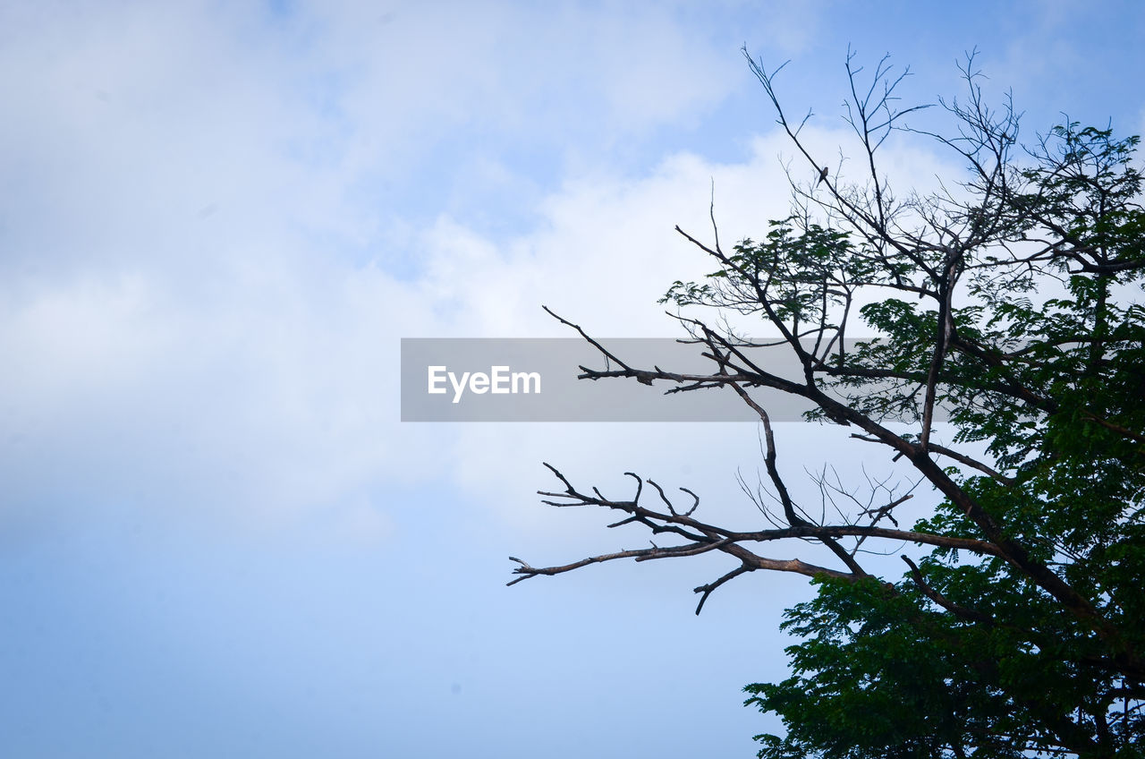 sky, tree, plant, cloud - sky, low angle view, beauty in nature, branch, nature, day, no people, tranquility, bare tree, outdoors, growth, blue, bird, vertebrate, silhouette, tranquil scene, animals in the wild