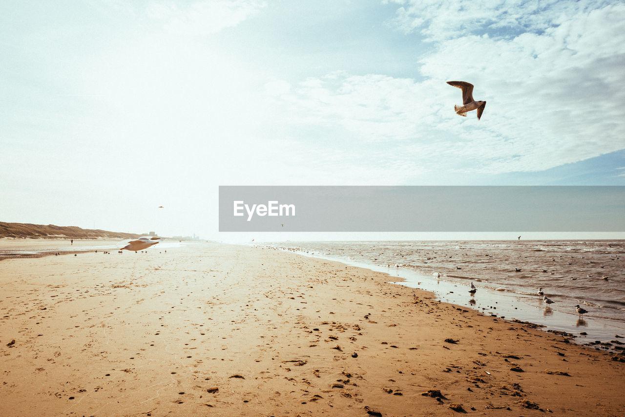 Bird flying over beach against sky