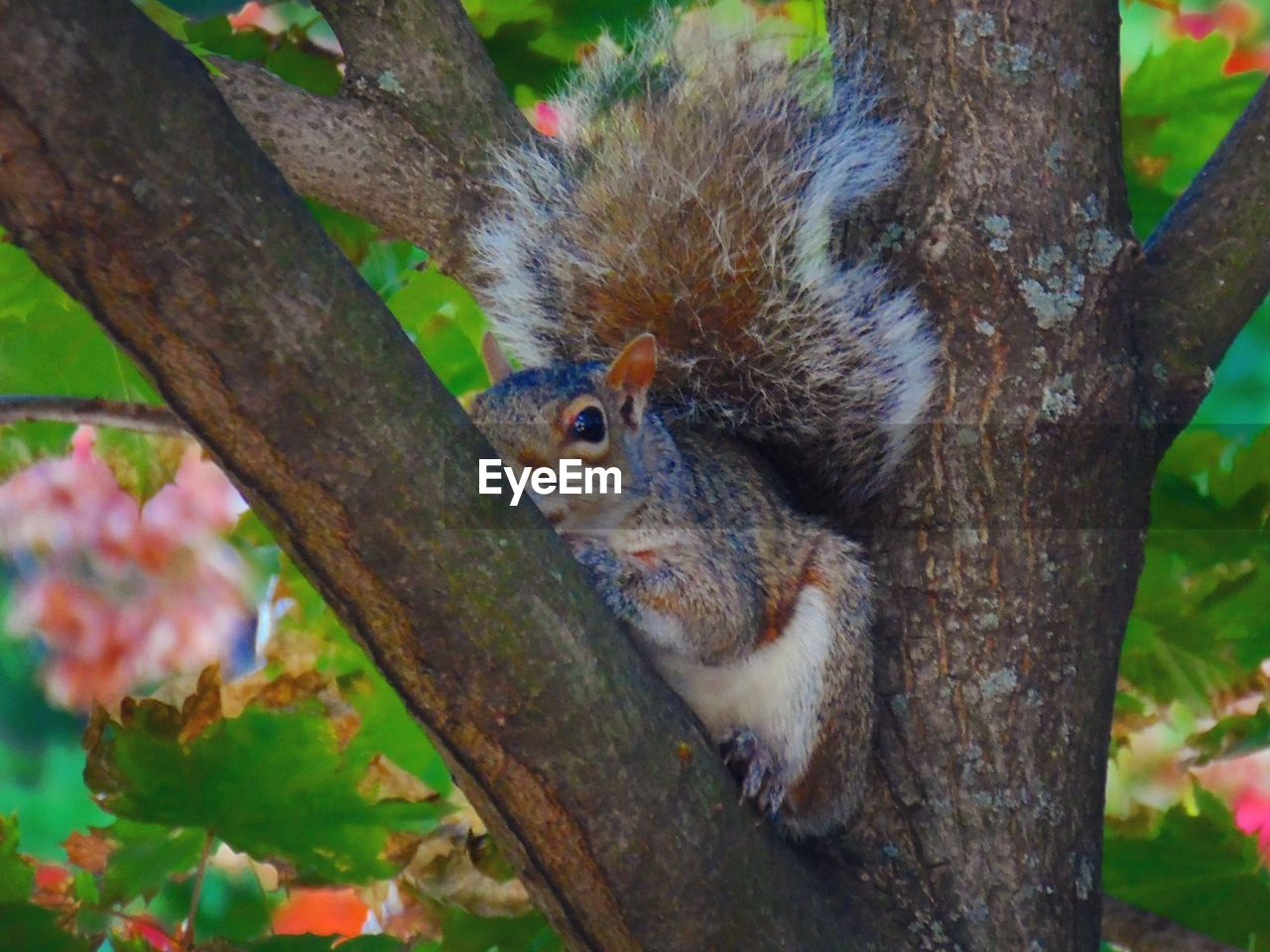 tree, rodent, squirrel, animal, plant, animal wildlife, one animal, animal themes, mammal, tree trunk, trunk, animals in the wild, branch, no people, focus on foreground, close-up, day, nature, vertebrate, outdoors, whisker