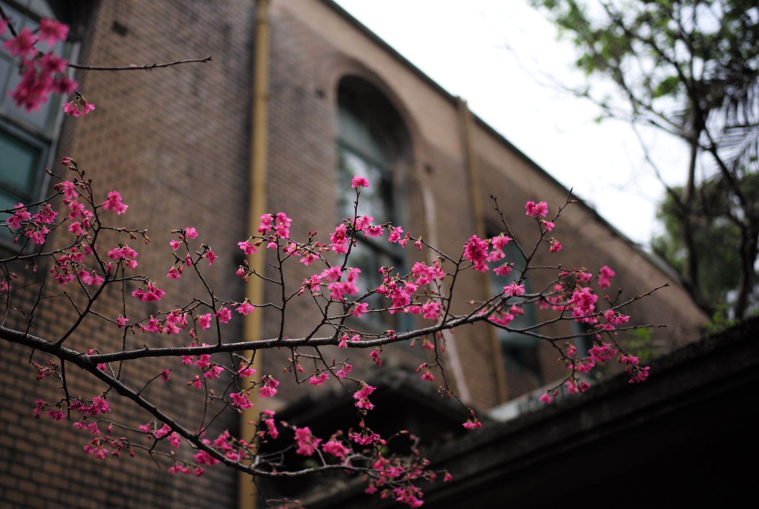 LOW ANGLE VIEW OF PINK FLOWERING PLANT BY BUILDING