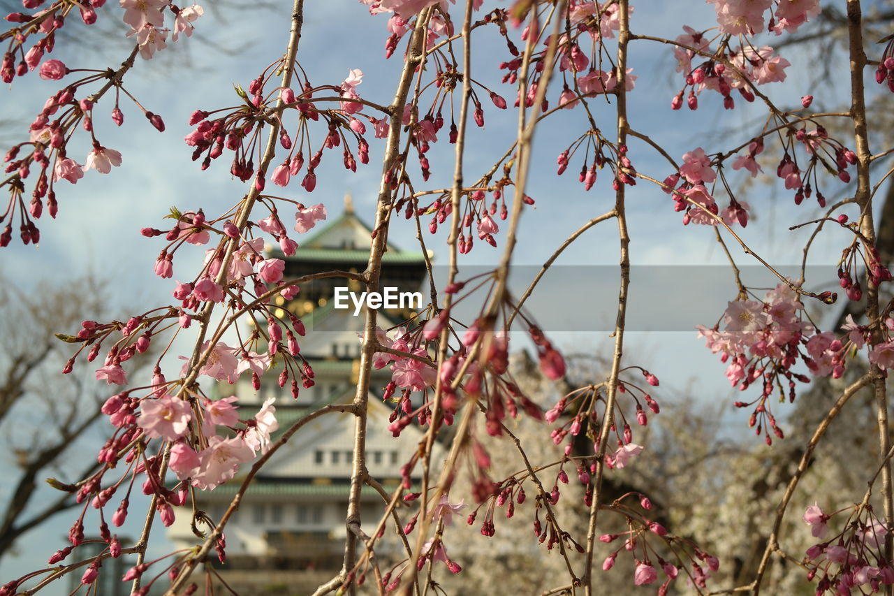 plant, growth, beauty in nature, tree, day, focus on foreground, no people, nature, close-up, branch, outdoors, flowering plant, tranquility, plant part, flower, leaf, freshness, pink color, selective focus, fragility, leaves