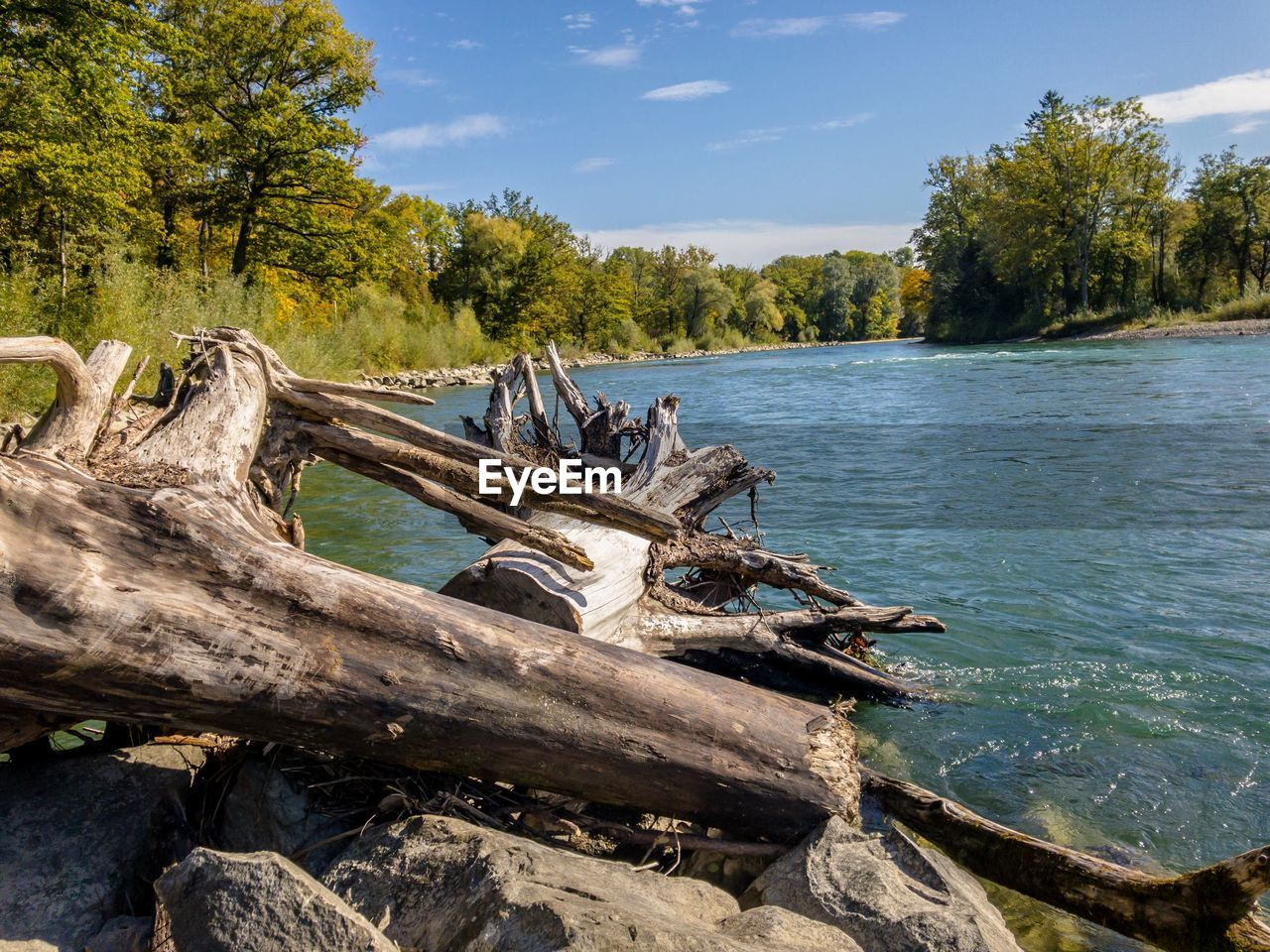 tree, plant, water, sky, nature, wood - material, wood, beauty in nature, day, tranquility, forest, log, timber, no people, cloud - sky, tranquil scene, non-urban scene, sunlight, scenics - nature, driftwood, outdoors