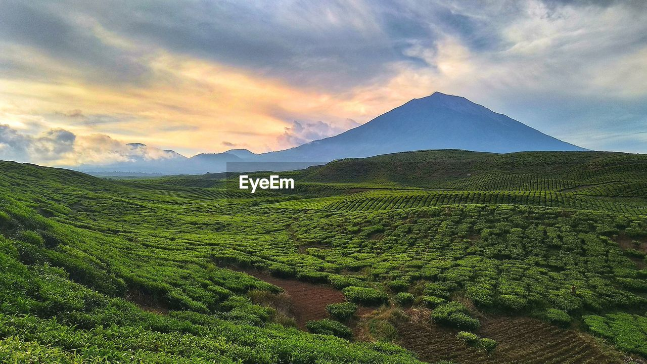 scenics - nature, beauty in nature, environment, sky, mountain, tranquil scene, tranquility, landscape, cloud - sky, land, nature, agriculture, no people, rural scene, plant, green color, growth, mountain range, non-urban scene, idyllic, outdoors, tea crop, plantation, rolling landscape