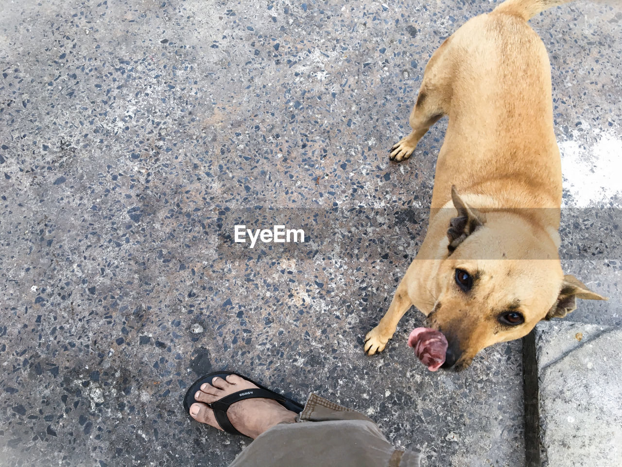 Portrait of dog standing by leg on footpath
