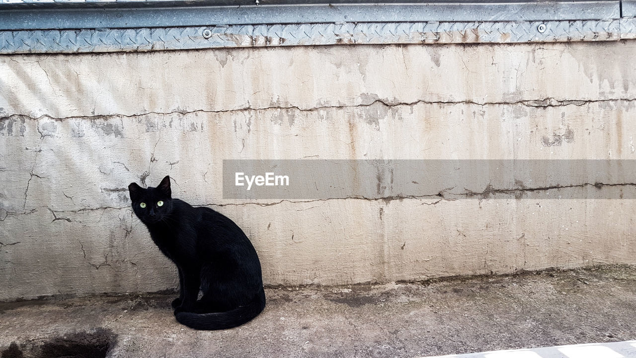 feline, cat, domestic, one animal, domestic cat, pets, domestic animals, mammal, animal themes, animal, vertebrate, black color, sitting, no people, wall - building feature, relaxation, day, side view, architecture, wall, whisker