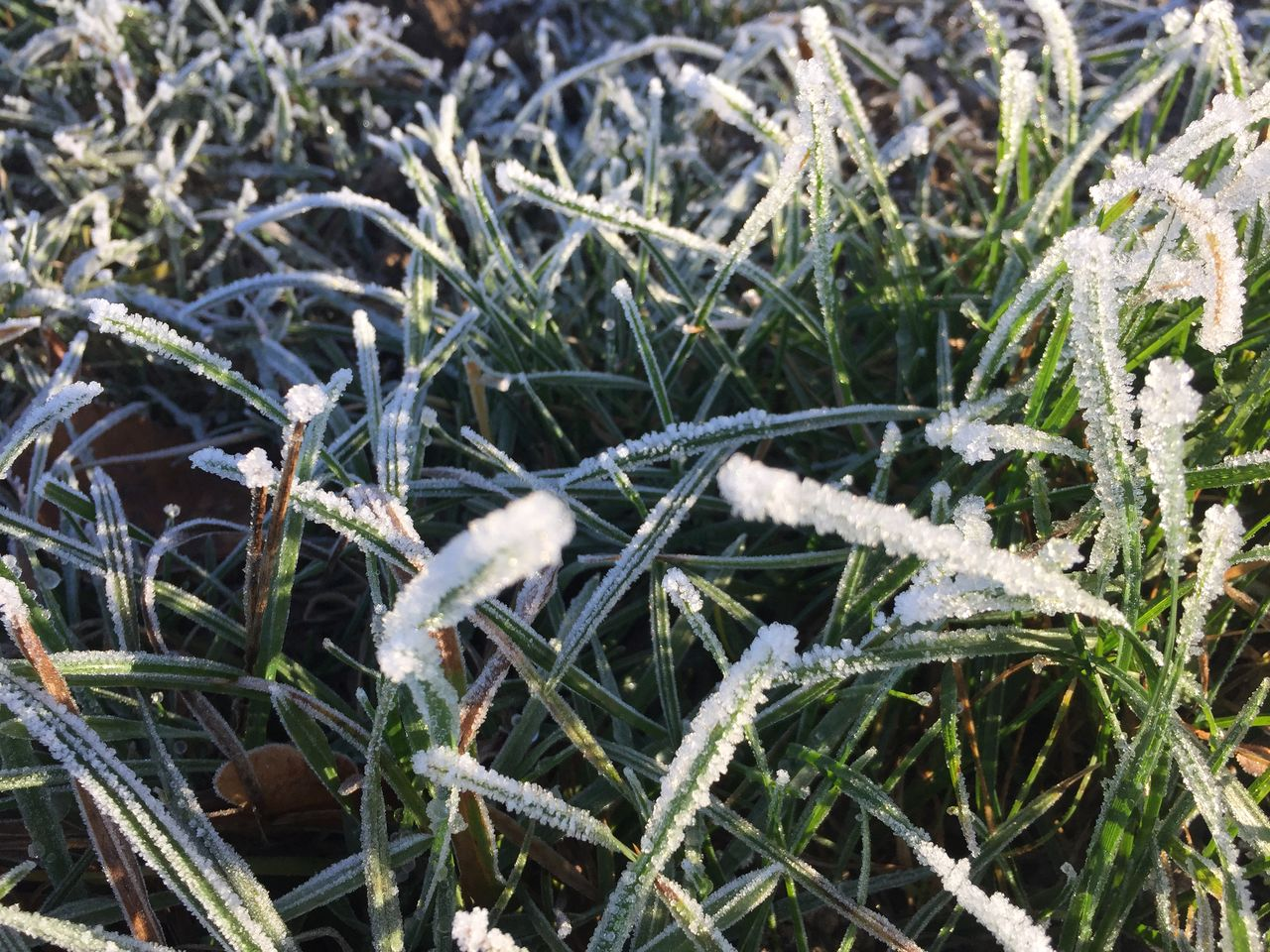 plant, cold temperature, nature, winter, growth, day, snow, close-up, land, no people, frozen, field, beauty in nature, grass, ice, frost, tranquility, outdoors, leaf, blade of grass