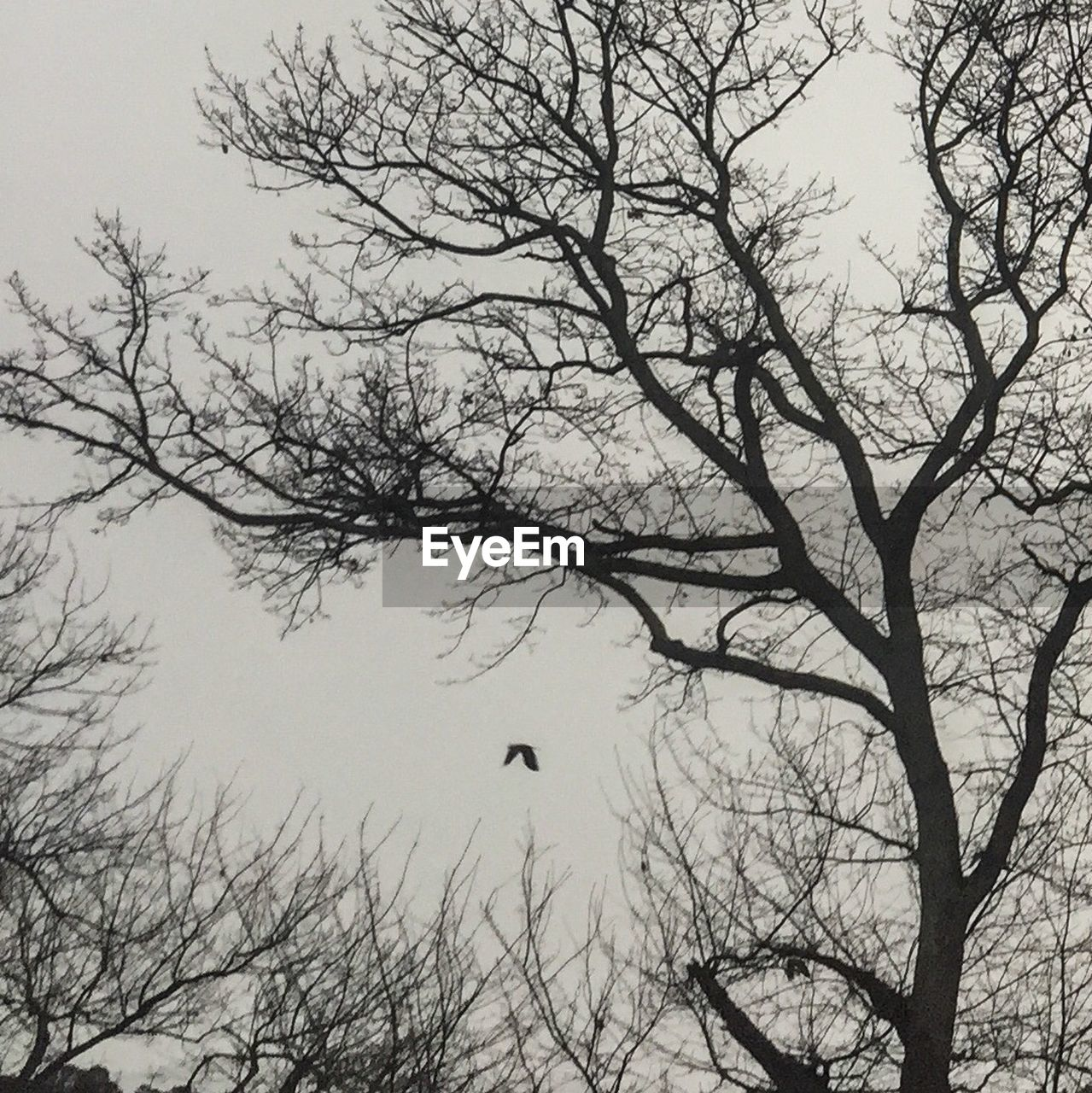 tree, bare tree, branch, nature, beauty in nature, no people, water, tranquility, outdoors, scenics, day, sky, animal themes