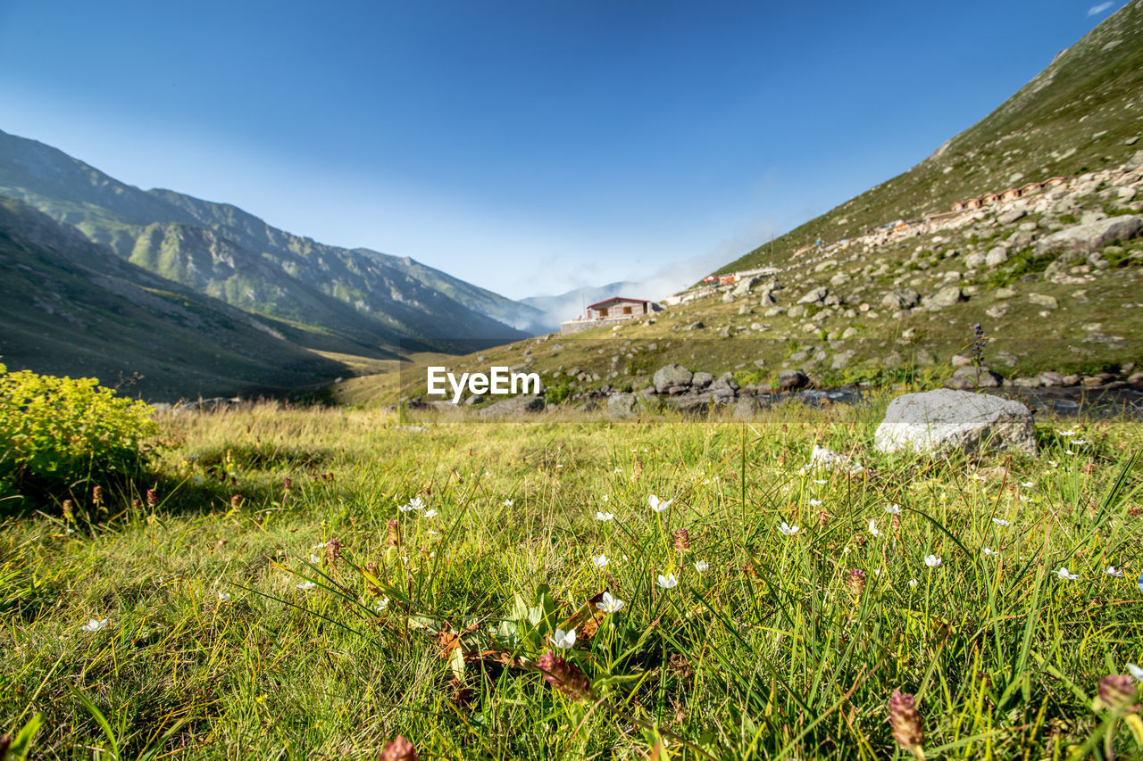 mountain, plant, beauty in nature, sky, grass, landscape, environment, scenics - nature, tranquility, tranquil scene, growth, nature, mountain range, land, green color, no people, field, non-urban scene, day, idyllic, outdoors, mountain peak