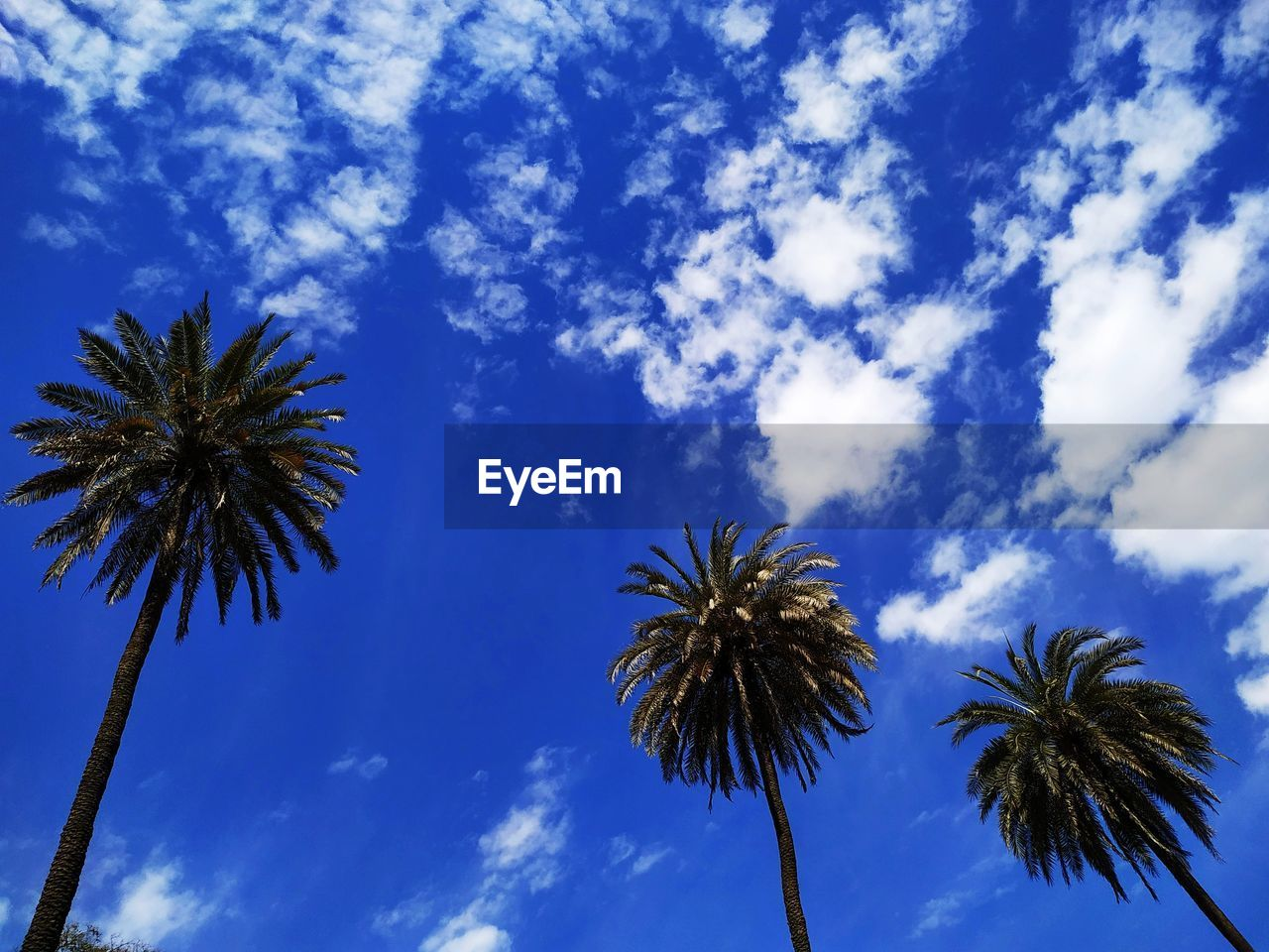 sky, low angle view, palm tree, tree, cloud - sky, tropical climate, plant, beauty in nature, growth, blue, no people, nature, tranquility, outdoors, day, tall - high, scenics - nature, tree trunk, tranquil scene, coconut palm tree, palm leaf, spiky