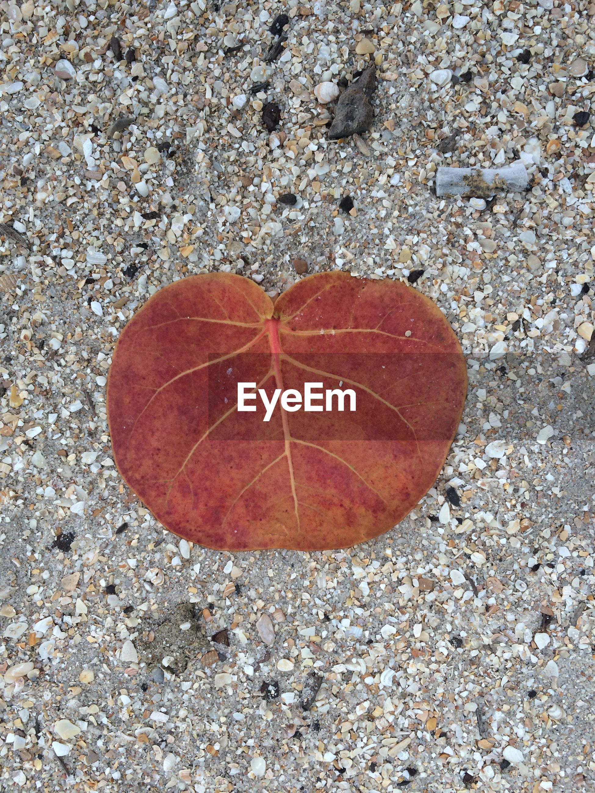 High angle view of brown leaf on sand