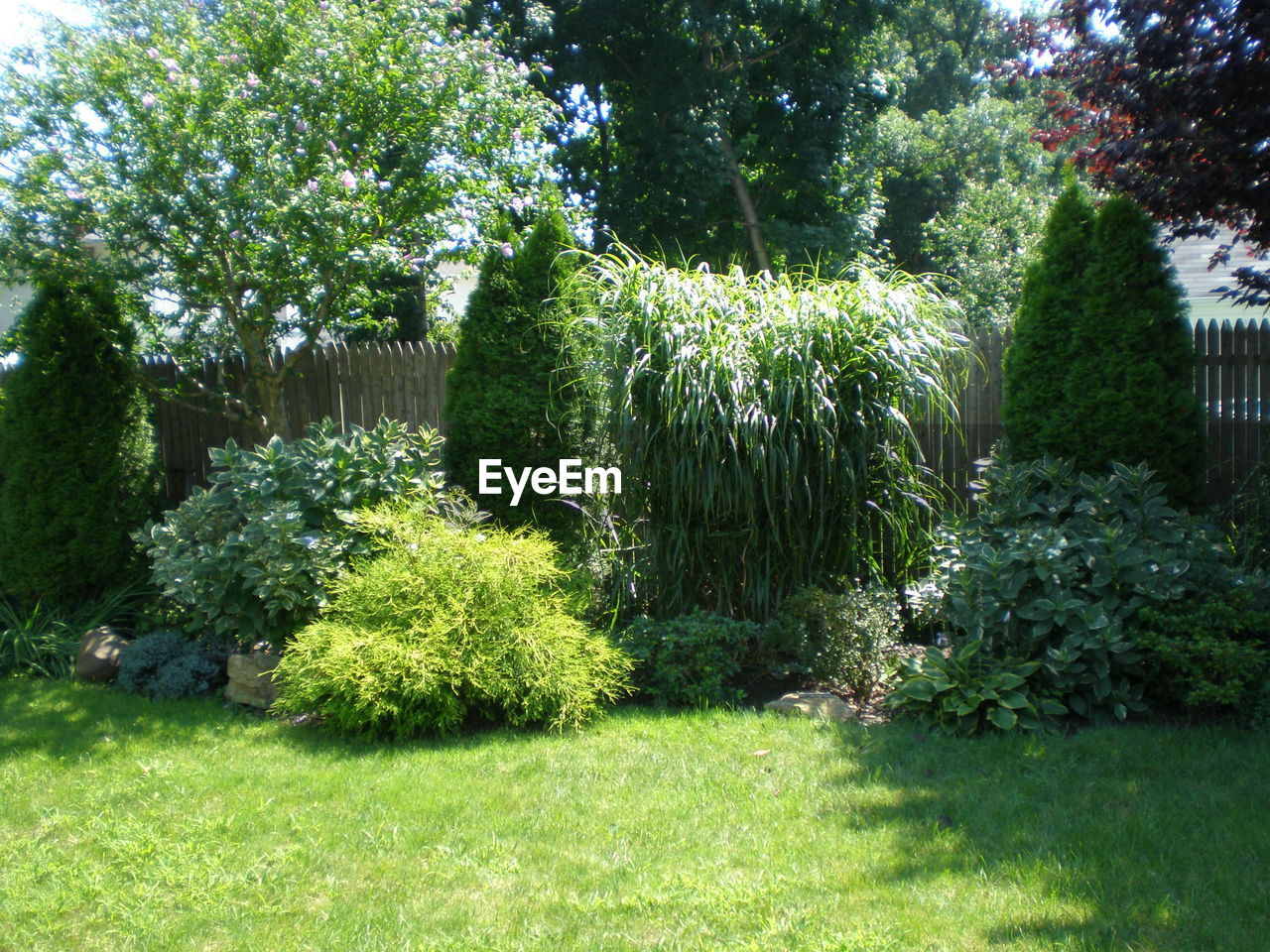 front or back yard, green color, grass, plant, growth, nature, tree, no people, summer, outdoors, day, flower