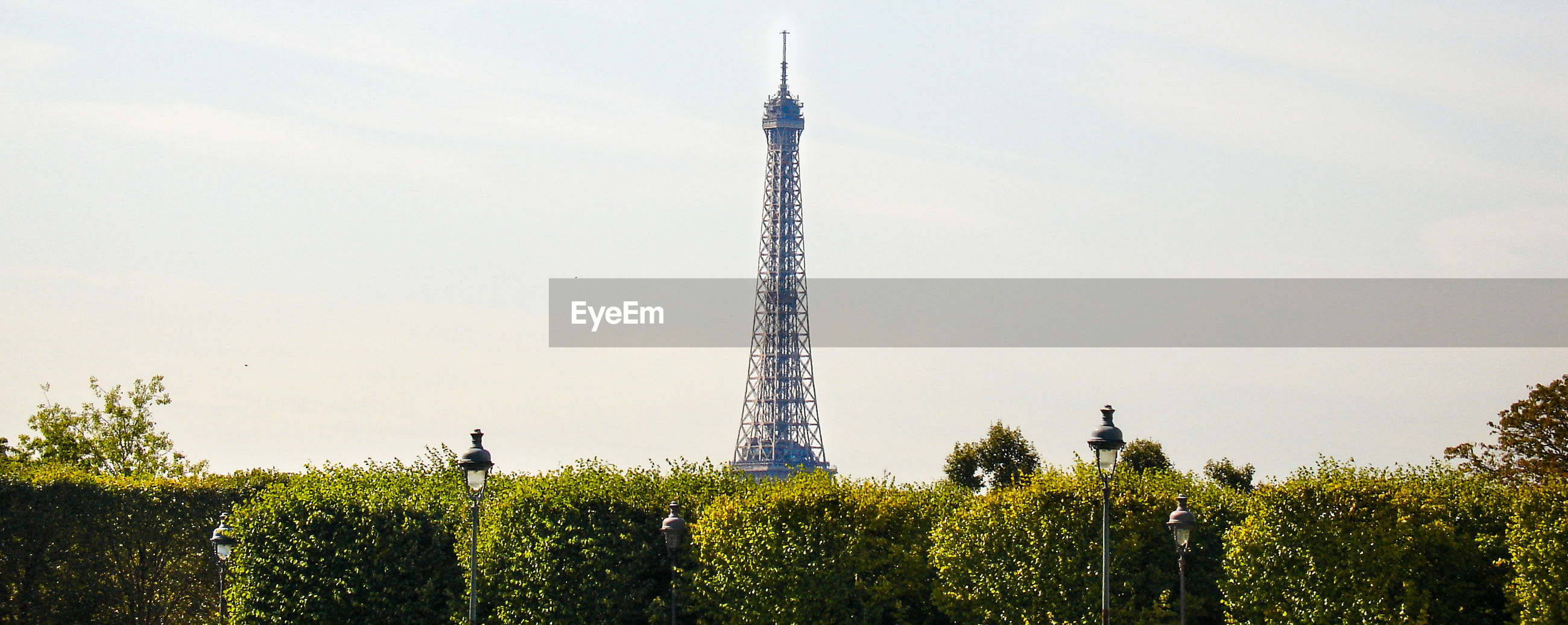 Plants by eiffel tower against sky