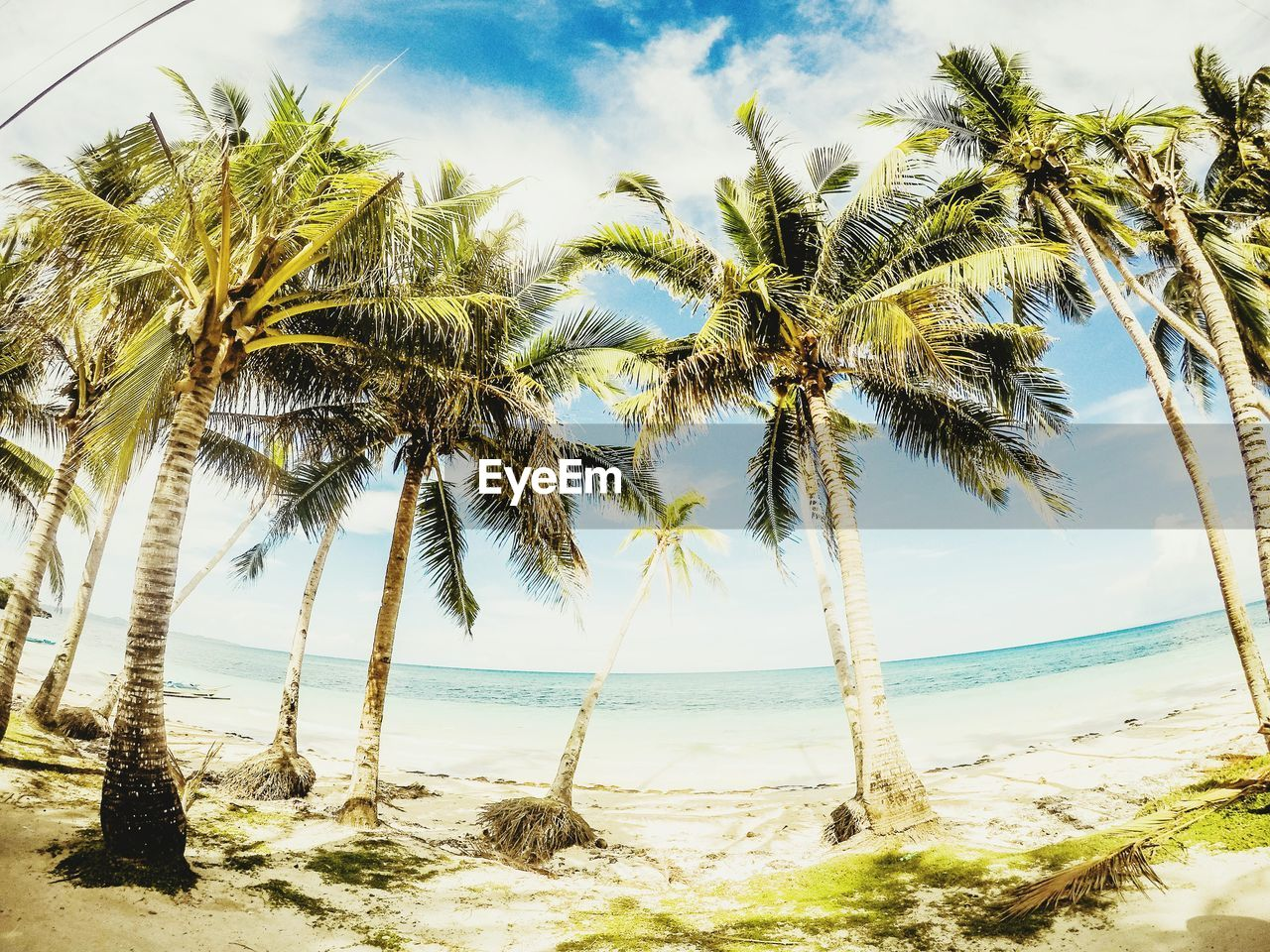 Beeeeeaacchh Palm Tree Beach Sea Water Tree Sand Cloud - Sky Nature Tropical Climate Sky Landscape Scenics Beauty In Nature Day Growth Outdoors No People Wanderlust Exploring Vacations Explore The World Lifeofadventure Neverstopexploring  Horizon Over Water