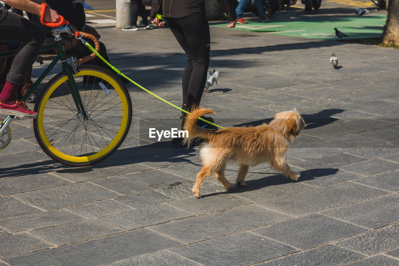 animal themes, domestic animals, one animal, pets, mammal, dog, real people, day, street, bicycle, outdoors, low section, standing, feline, one person, people