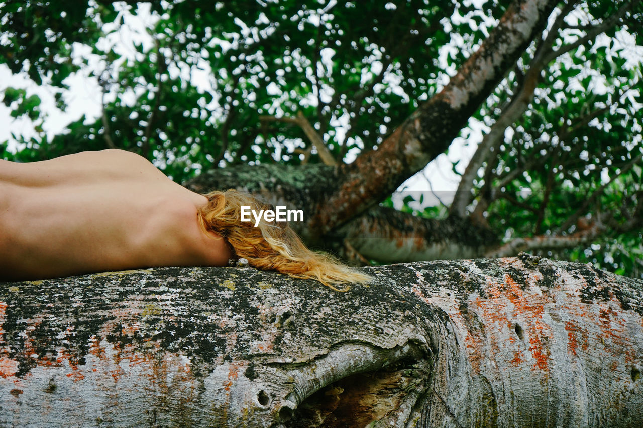 Midsection of person feeding tree