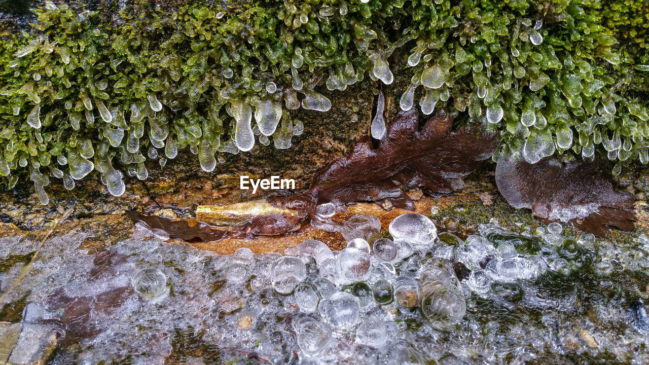Leaves Covered With Ice