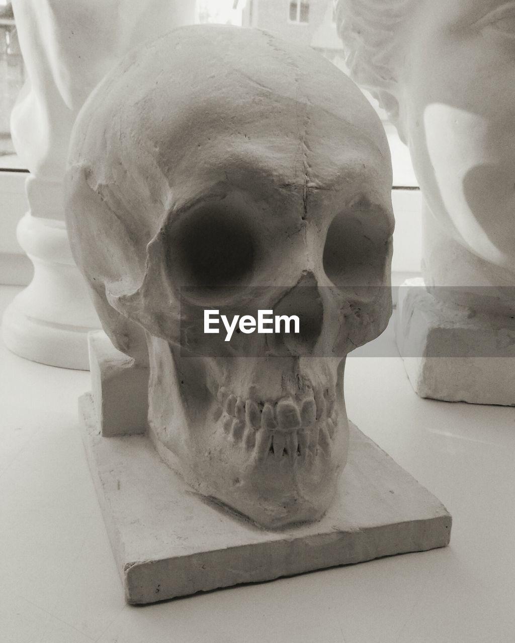 human skull, human skeleton, human bone, bone, still life, indoors, human body part, close-up, spooky, anatomy, day