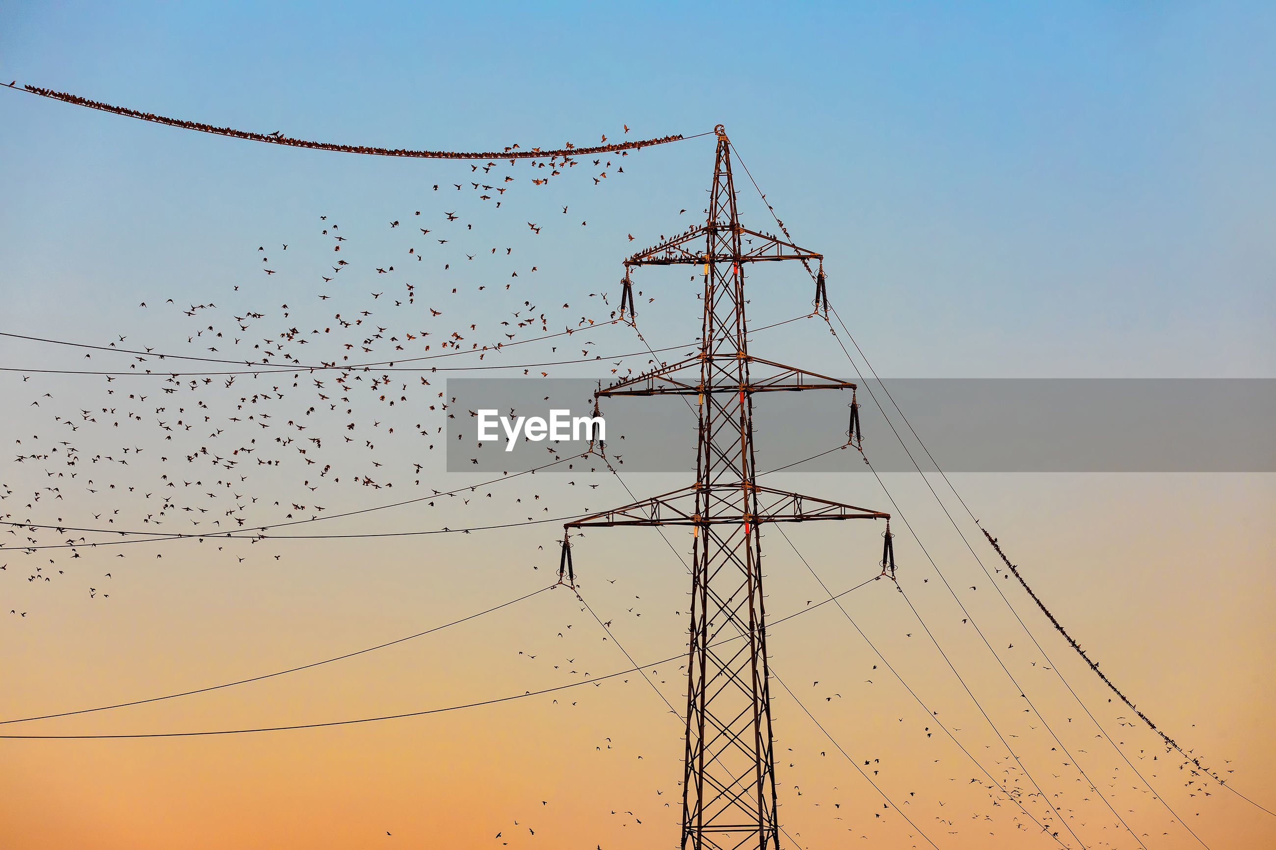 LOW ANGLE VIEW OF BIRDS ON ELECTRICITY PYLONS AGAINST SKY