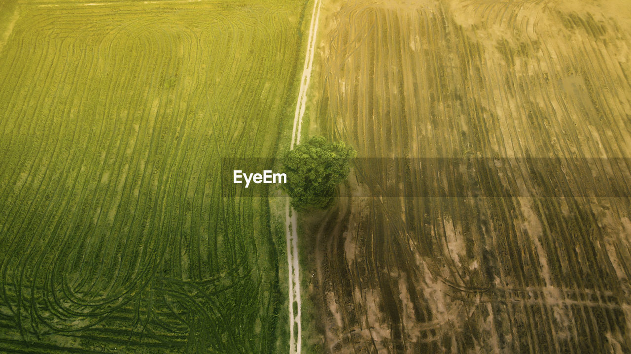 Aerial shot of paddy field during majestic morning.