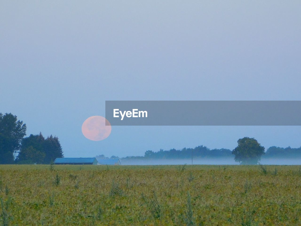 field, beauty in nature, nature, tranquility, tranquil scene, landscape, scenics, clear sky, tree, moon, idyllic, growth, grass, outdoors, no people, day, sky, rural scene, astronomy