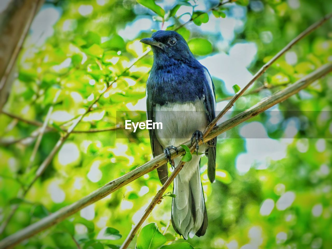 animal, animal themes, one animal, animal wildlife, vertebrate, animals in the wild, bird, perching, plant, focus on foreground, day, no people, tree, green color, branch, nature, outdoors, low angle view, close-up, growth, power supply
