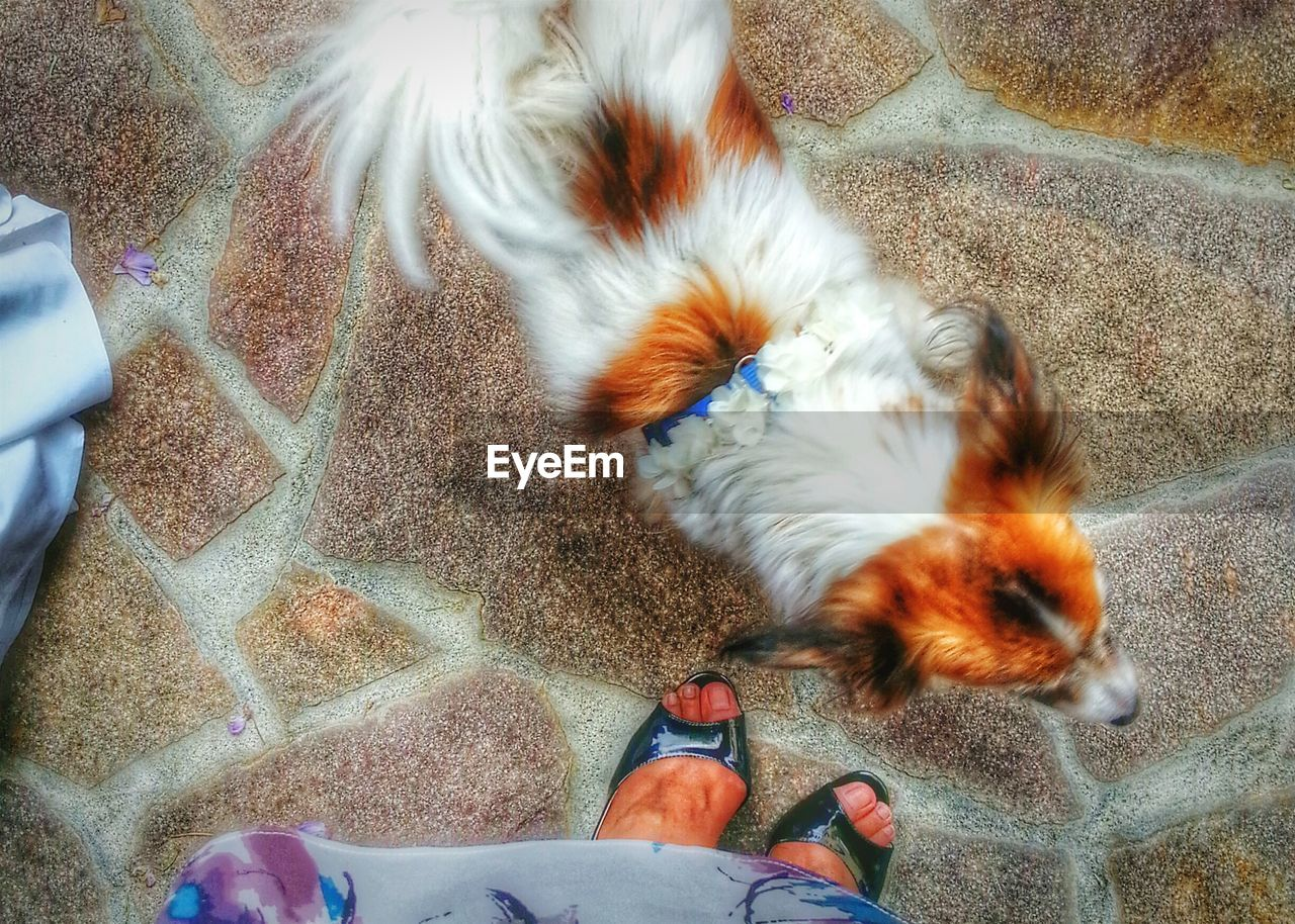 real people, domestic animals, one person, pets, high angle view, one animal, mammal, blurred motion, motion, lifestyles, outdoors, day, low section, leisure activity, men, human hand, human body part, water, nature, people