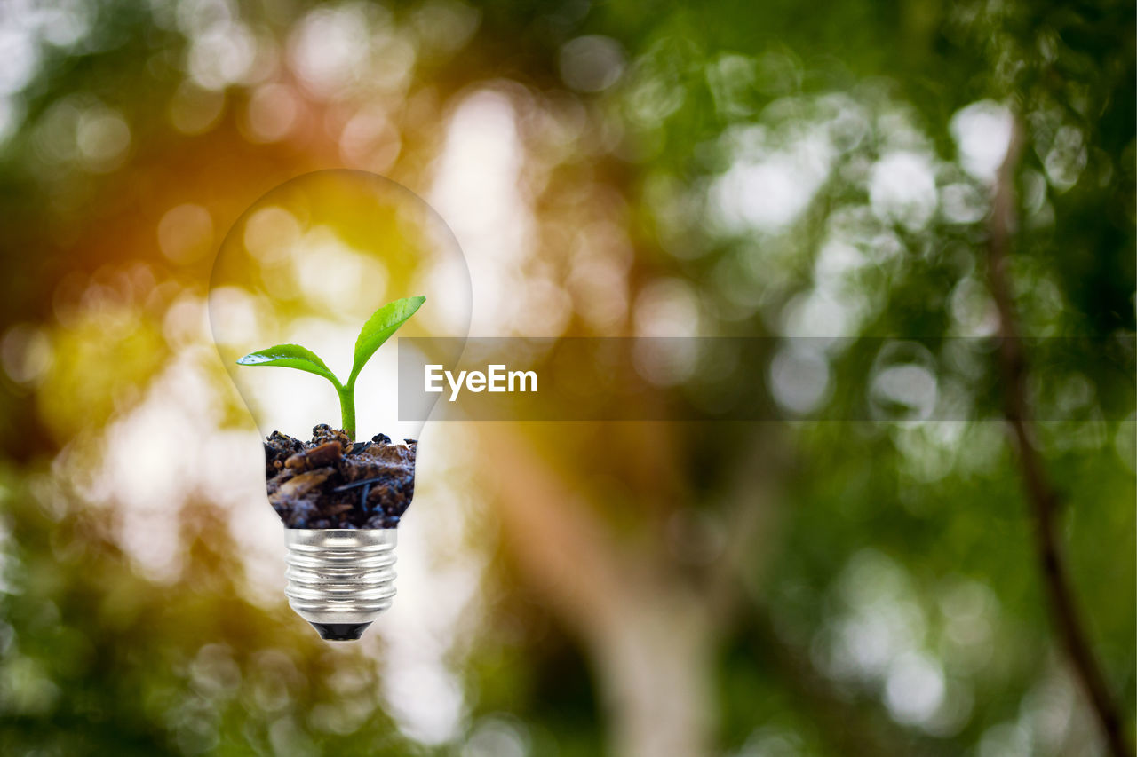 plant, focus on foreground, leaf, plant part, growth, nature, close-up, day, no people, selective focus, green color, beauty in nature, animal wildlife, animals in the wild, tree, outdoors, animal, invertebrate, animal themes, hanging, small