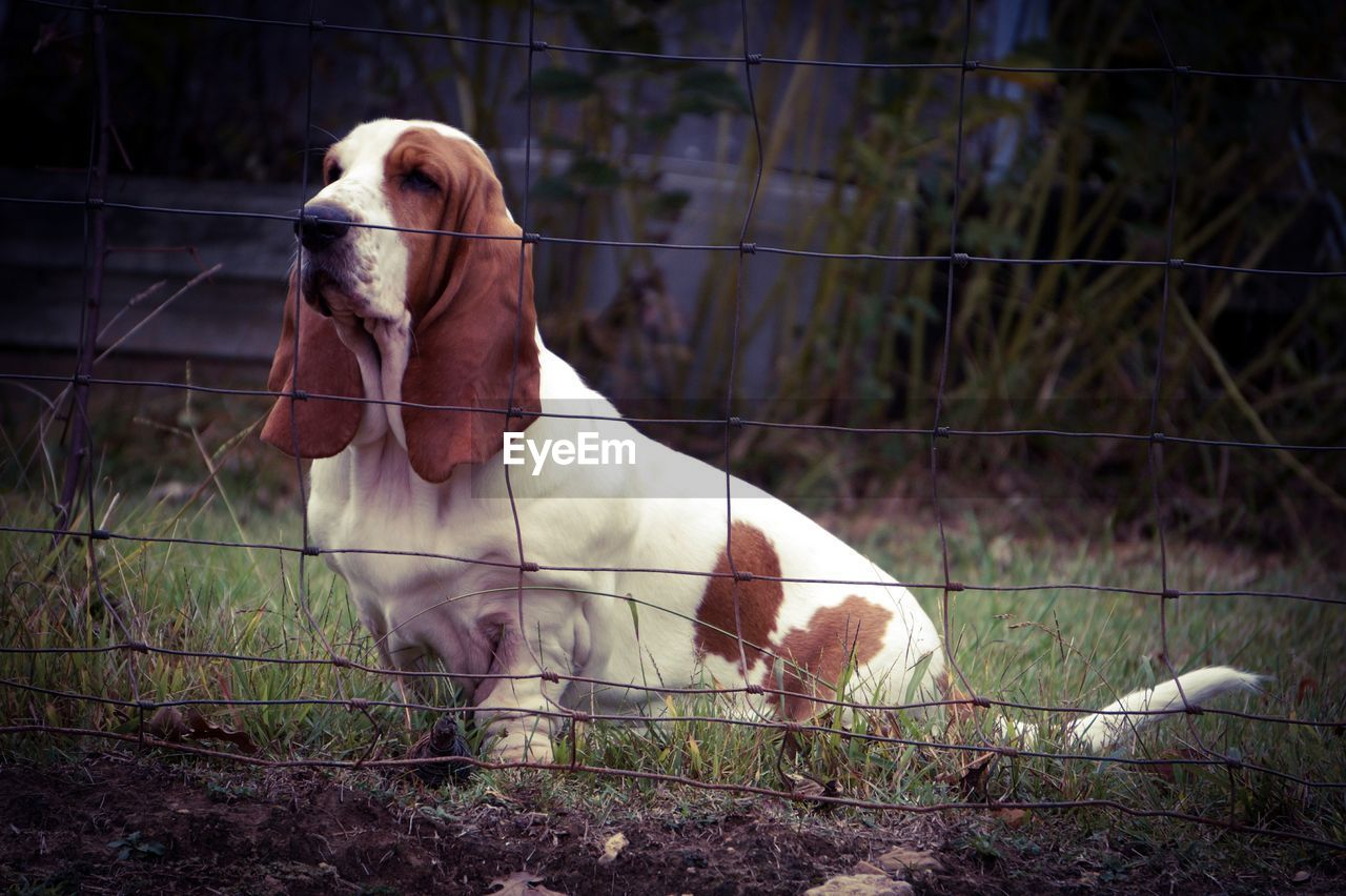 domestic animals, animal themes, mammal, one animal, dog, no people, pets, day, outdoors, close-up, nature
