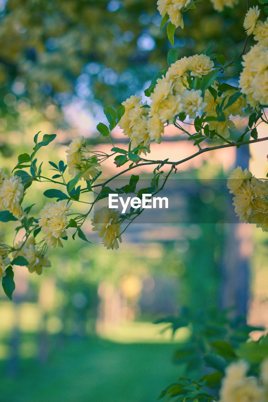 plant, flowering plant, flower, growth, beauty in nature, freshness, vulnerability, close-up, fragility, nature, tree, day, focus on foreground, plant part, yellow, leaf, no people, selective focus, outdoors, tranquility, flower head