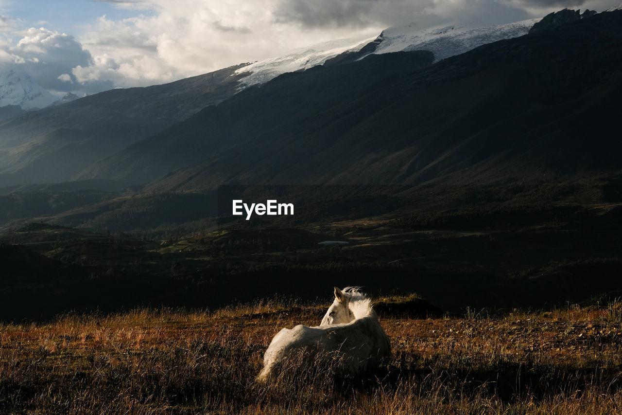 Horse Resting On Field Against Mountain Range During Sunset