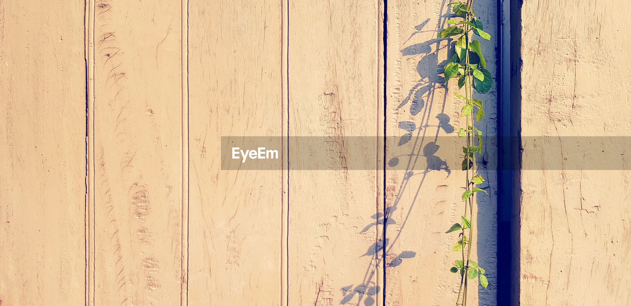 FULL FRAME SHOT OF WALL WITH WOODEN FENCE