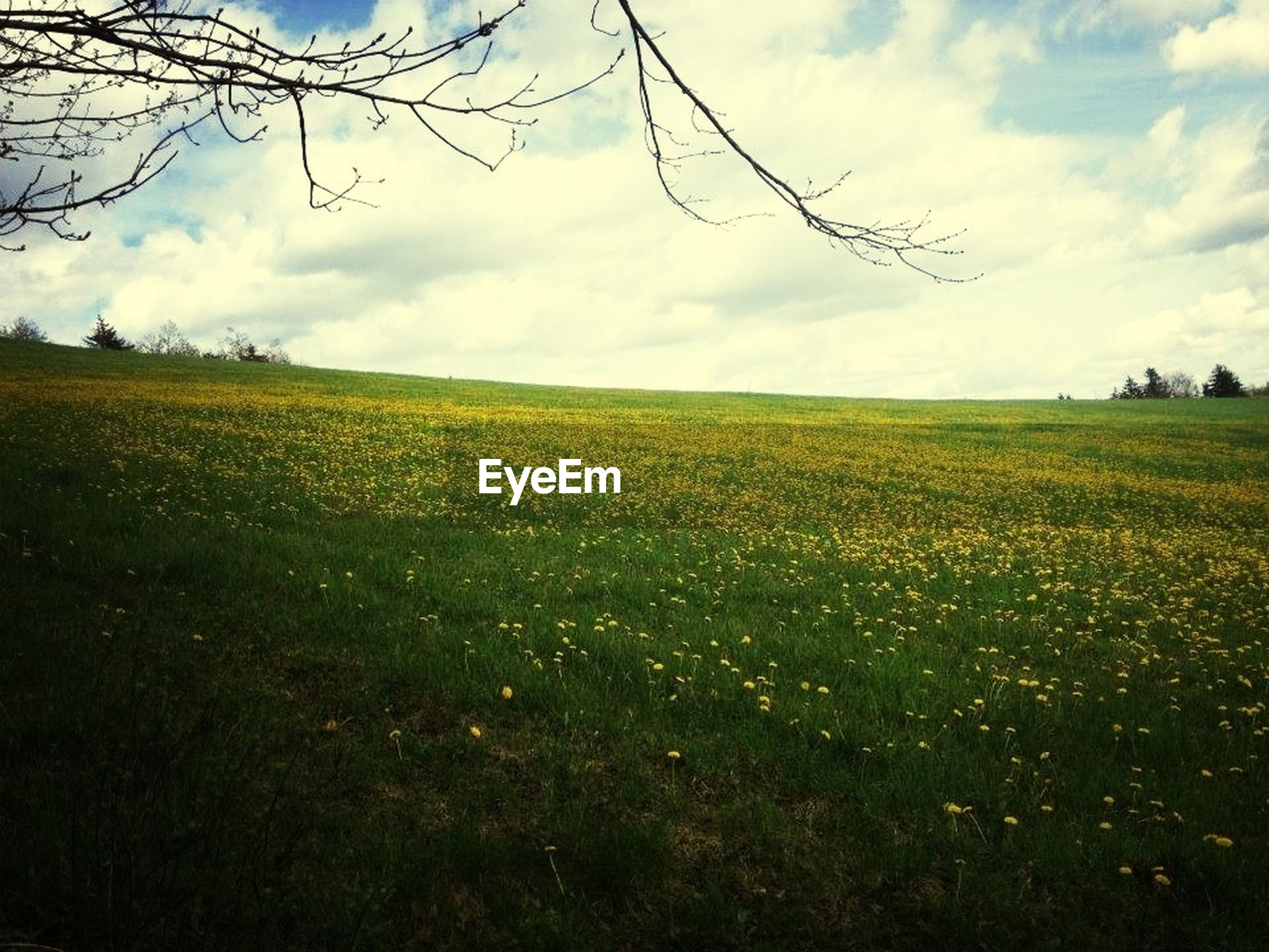 field, sky, landscape, agriculture, tranquil scene, rural scene, tranquility, beauty in nature, scenics, growth, cloud - sky, nature, yellow, farm, cloudy, cloud, crop, grass, cultivated land, flower