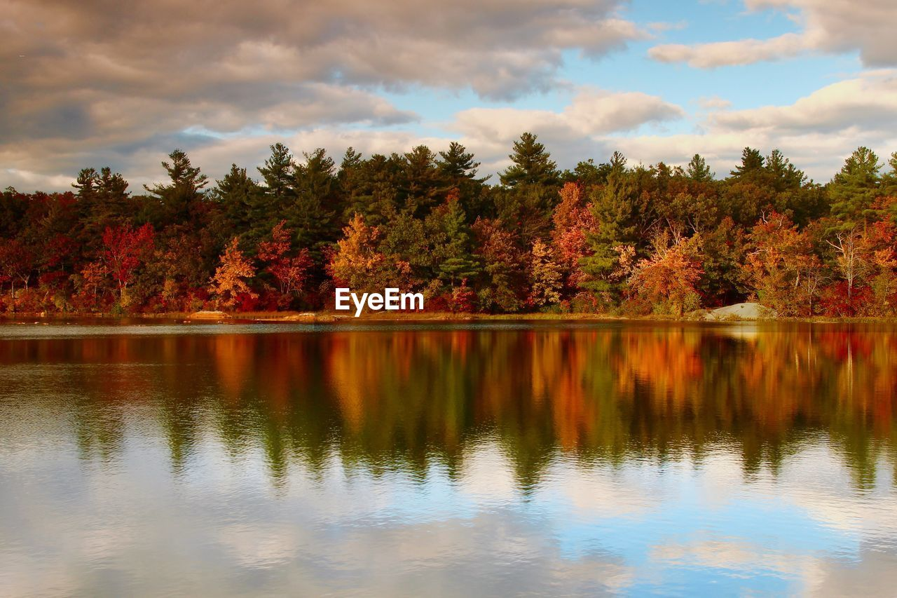 tree, reflection, beauty in nature, water, plant, lake, sky, scenics - nature, tranquility, cloud - sky, tranquil scene, autumn, nature, waterfront, change, idyllic, non-urban scene, no people, day, outdoors, reflection lake