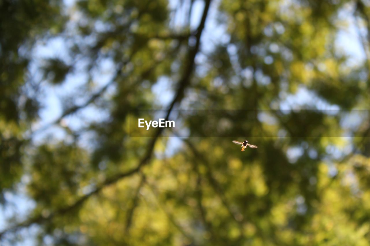 Low angle view of insect against trees