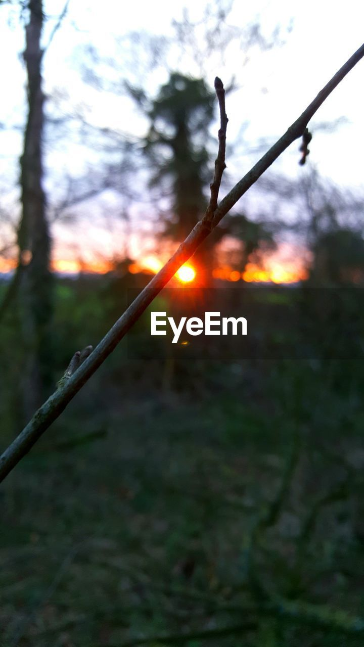 outdoors, no people, tree, nature, sunset, close-up, beauty in nature, day, sky