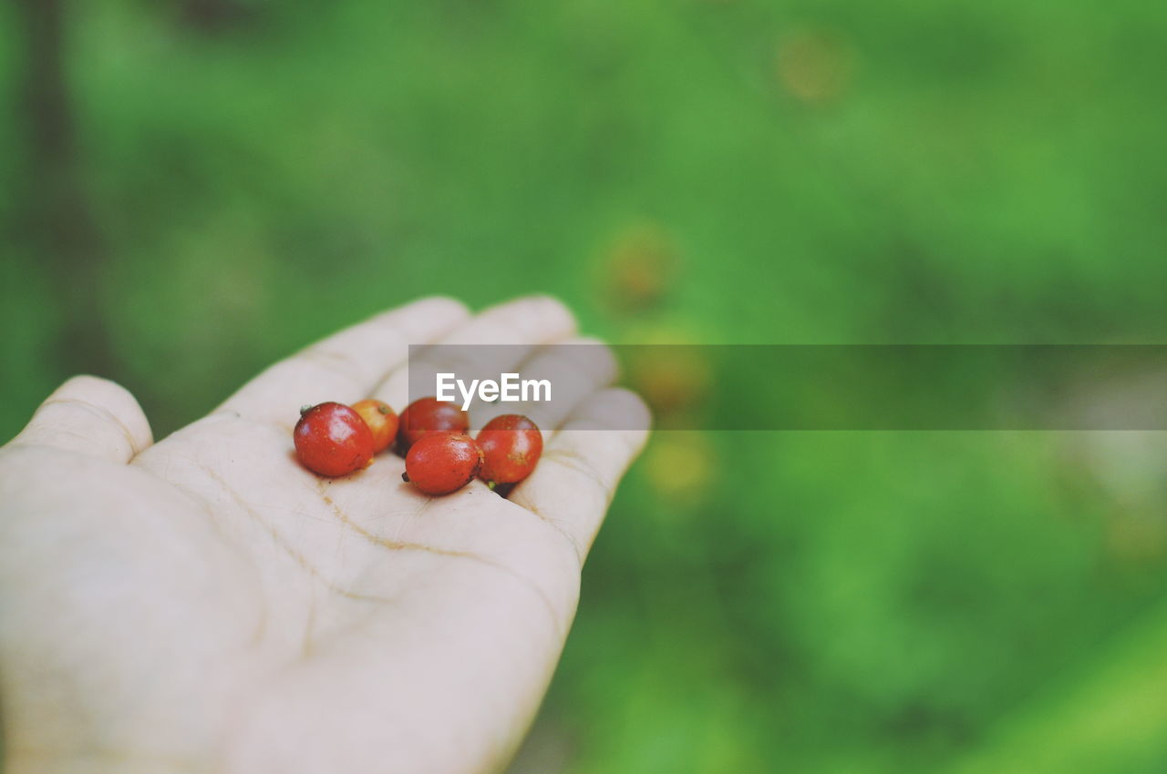 Cropped hand of woman holding berries