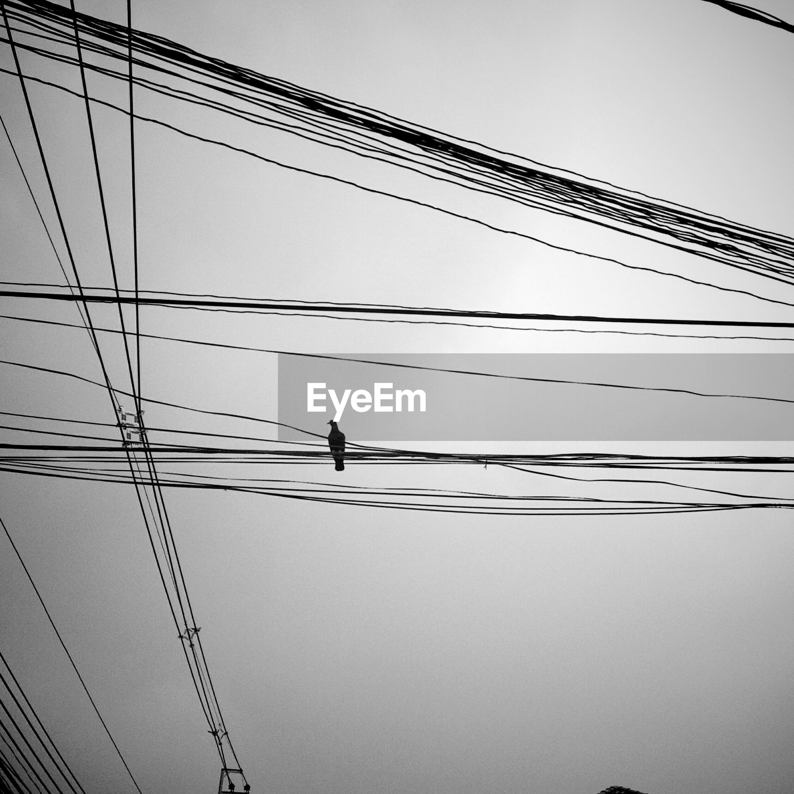 Low angle view of bird perching on power line against clear sky