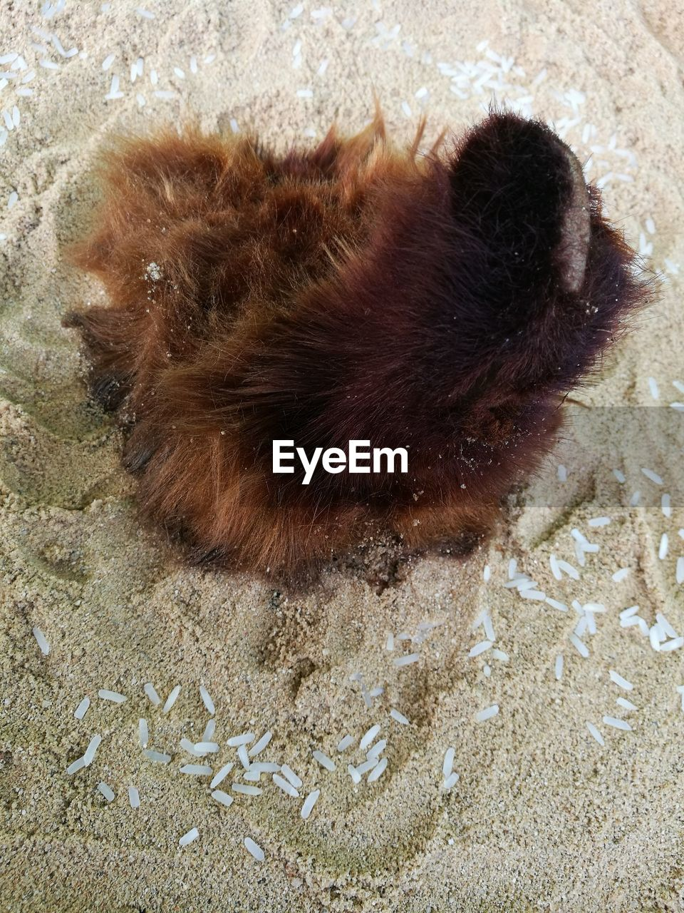 animal themes, one animal, high angle view, no people, sand, day, indoors, mammal, close-up